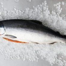 ماهی سالمون ایرانی
