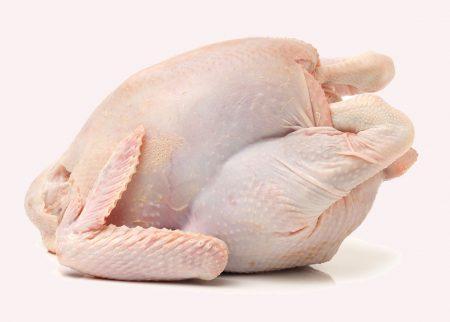 مرغ کامل کشتار روز جوجه خروس